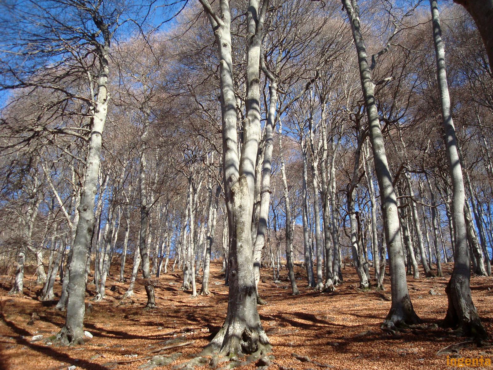 Tipi Di Piante Sempreverdi riconoscere gli alberi – icollidibergamo